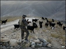 A Nato French Foreign Legion soldier is surrounded by goats at a checkpoint