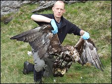 RSPB Scotland's Bob Elliot with dead Golden Eagle in Argyll (June 2009)