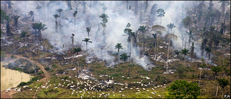Fire clearing Amazon forest for cattle. Societies gain financially from leaving forests intact rather than clearing them.