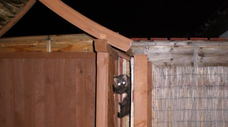 Pine marten, photo courtesy of Ken Bebbington