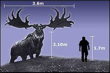 Giant elk graphic