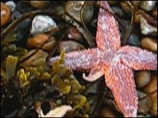 Starfish on Hove beach