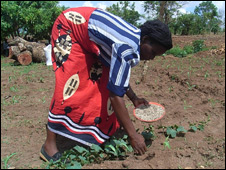 Emma Aron puts fertiliser around maize plants in her field