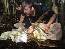 Rescuers untangle a deer