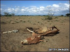A donkey carcass lies in a dry riverbed in Lodwar, Kenya, on 9 November 2009