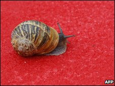 garden snail on red background
