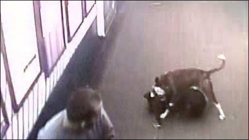 ed CCTV footage of a blind woman's guide dog being attacked