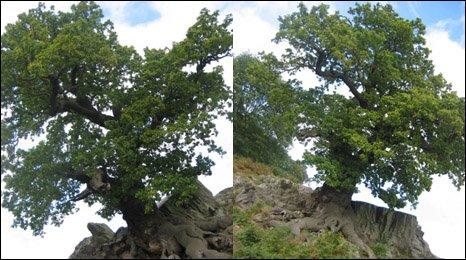 Trees at Bradgate Park