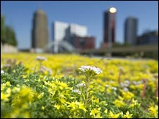 Green roof in Rotterdam, pic courtesy of Rotterdam Climate Initiative