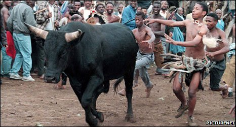 People chasing a bull