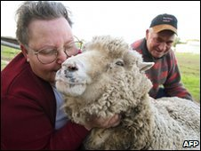 world's oldest sheep