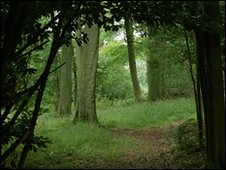 Woodland in Oxfordshire