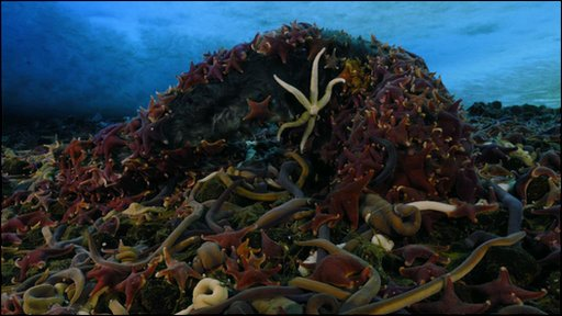 Starfish and nemertine worms