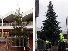 Peterlee Christmas trees