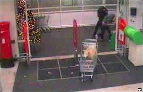 Sheep in shopping trolley