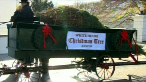 A Christmas tree being delivered