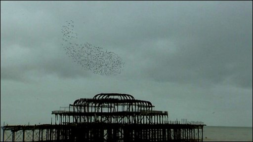 Starlings over Brighton's West Pier