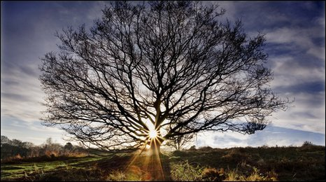 Tree at Bradgate Park (Photo: Chris Denner)