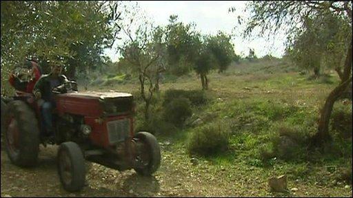 An olive farmer