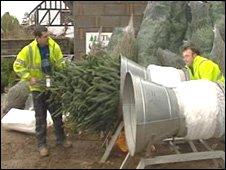 Gower Fresh Christmas Trees