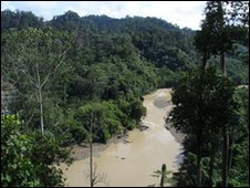 The jungle in Borneo