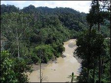 The jungle in Borneo