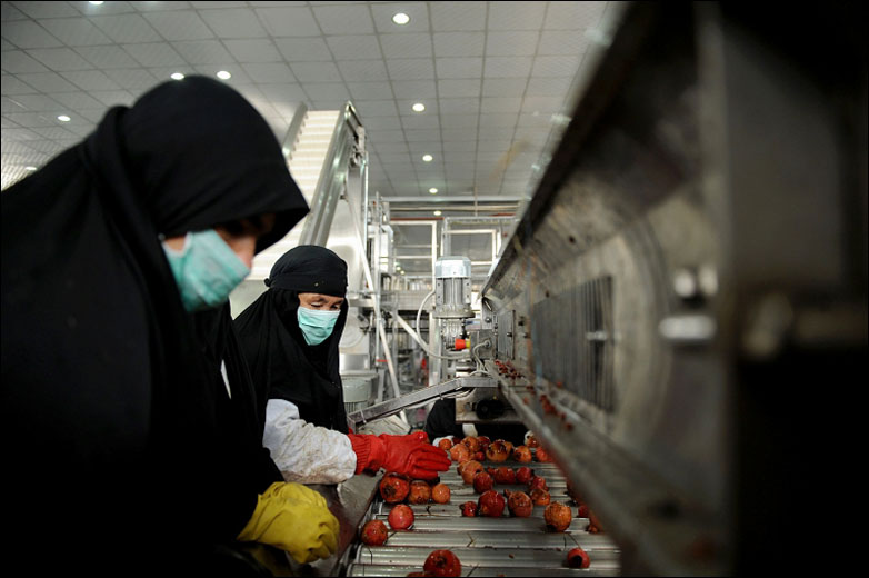 Workers sort pomegranates at the Omaid Bahar Fruit Processing Company, Afghanistan's first fruit processing and juicing facility, in Kabul, 7 December 2009.