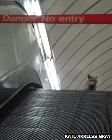 Fox on the Tube