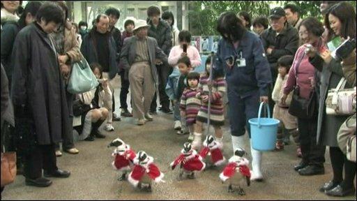 Penguins in Santa Claus costumes