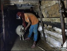 A Palestinian smuggles a sheep into Gaza through a tunnel under the Rafah border crossing with Egypt, November 2009