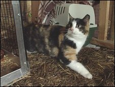 One of the cats being re-homed at a stables