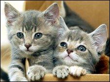 Generic abandoned kittens