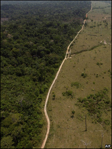 Rainforest (left) alongside cleared area (Image: AP)