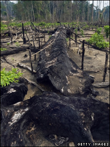 Felled and burnt tree (Getty Images)