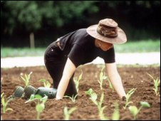 Woman on her knees in a field tending shoots