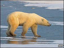 Polar bear (Image: AFP)