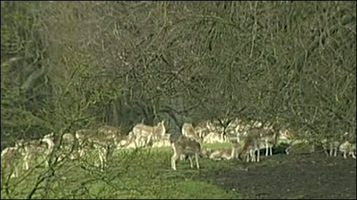 Herd of deer in field