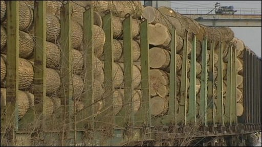 Logs at a yard on the Chinese border