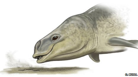 Artist's impression of Mammalodon (Carl Buell)
