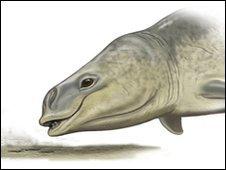 Artist's impression of Mammalodon (Carl Buell)