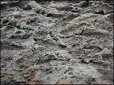 Maldon mud