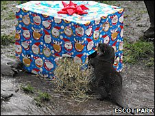 Otter opening a present