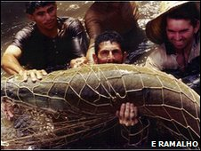 Fishermen caring for a trapped arapaima