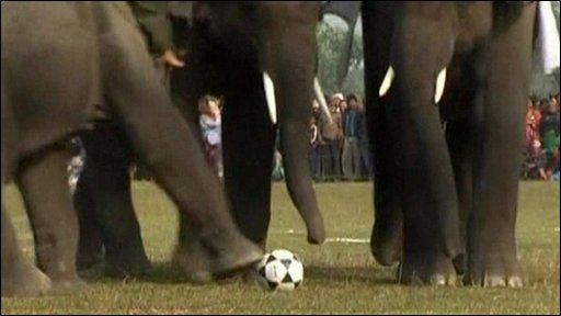 Several elephants tackle the ball
