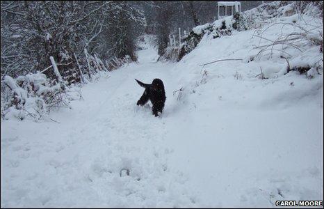 A snowy lane outside Llanferres