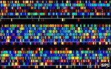 Human genome (SPL)