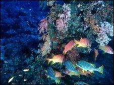 Coral reef (SPL)