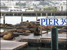 Sea lions at San Francisco's Fishermen's Wharf (January 2009)