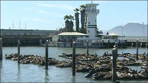 Sea lions in San Francisco