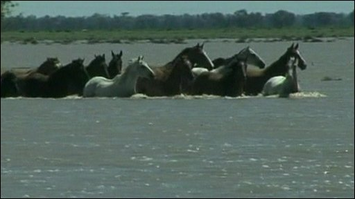 Horses running through floodwaters